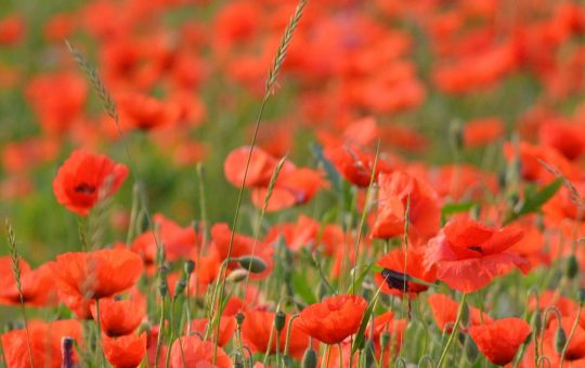 All about Passchendaele, the Last Post, John McCrae and the First World War: This is why Ypres and Flanders fields are worth a visit.